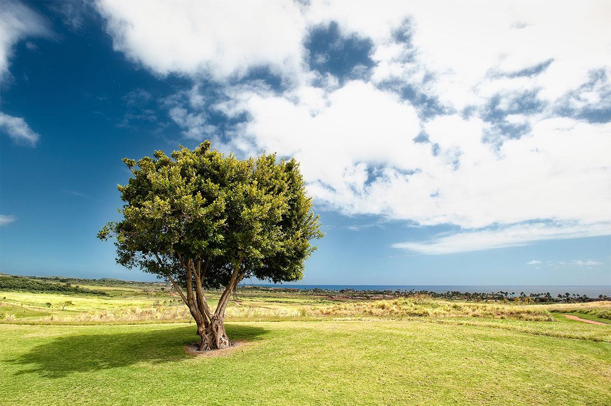 Baum Klimawandel - Blog Beitrag